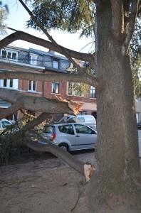 Chute de branches place Jean Tousseul à Seilles en septembre 2012.